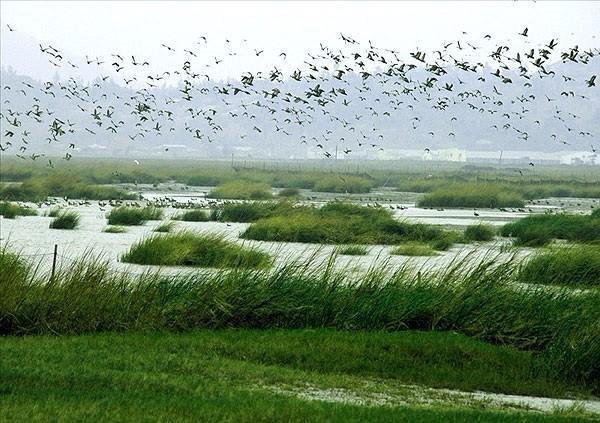 令其在旅游开发方面必须以环境保护为核心,而湿地旅游先天的科普基因图片